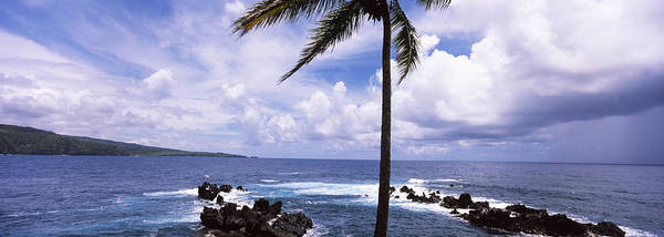 Physical Features Wall Art - Photograph - Palm Tree On The Coast, Honolulu Nui by Panoramic Images