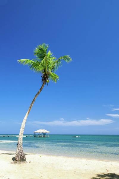 Roatan Photograph - Palm Tree On Tropical Beach by Dstephens
