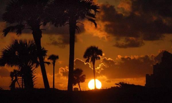 Digital Art - Palm Tree Sunrise In Gulf Shores by Michael Thomas