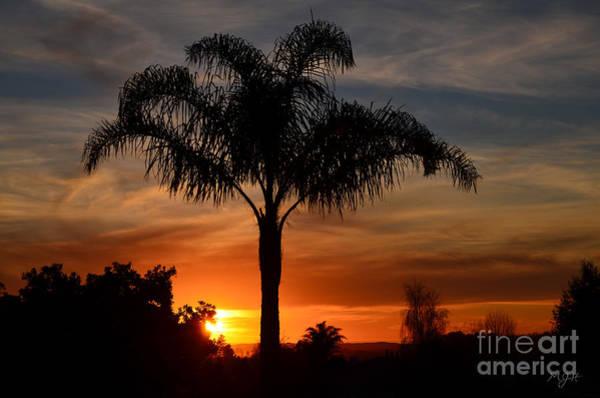 Photograph - Palm Tree Sunset by Mathias