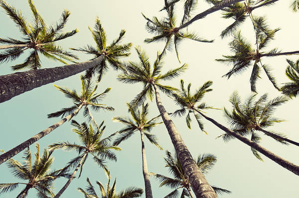 California Photograph - Palm Tree Sway by Bree Madden