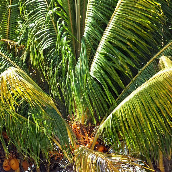 Photograph - Palm Tree Upclose On Eleuthera by Duane McCullough