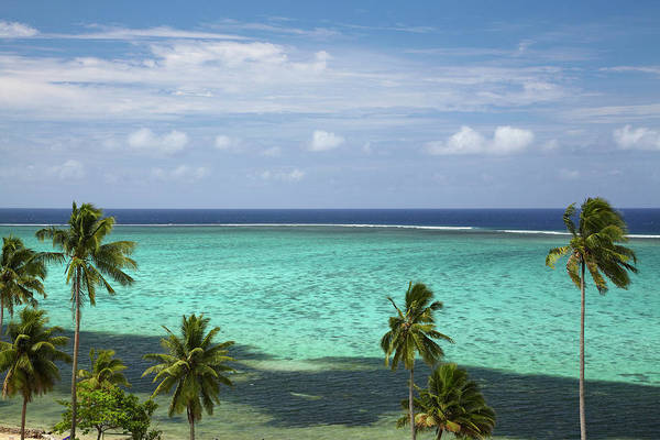 Foreshore Photograph - Palm Trees And Coral Reef, Crusoe's by David Wall