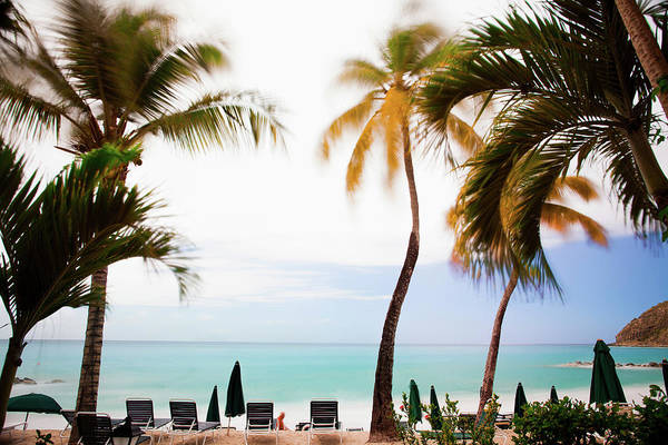 Beach Holiday Photograph - Palm Trees And Sun Loungers On Tropical by Cultura Rm Exclusive/chad Springer