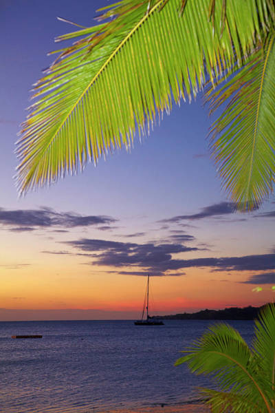 Foreshore Photograph - Palm Trees And Sunset, Plantation by David Wall