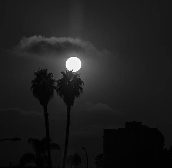 Digital Art - Palm Trees And The Moon by Photographic Art by Russel Ray Photos