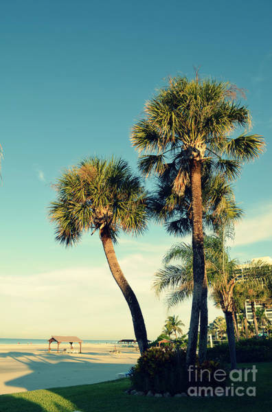 Photograph - Palm Trees At Sarasota by Patricia Awapara