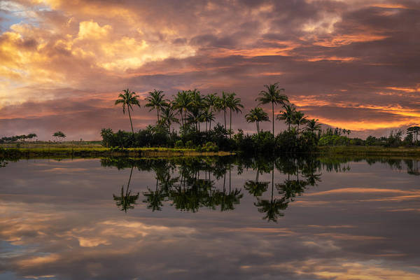 Okeeheelee Park Photograph - Palm Trees At Sunset by Debra and Dave Vanderlaan