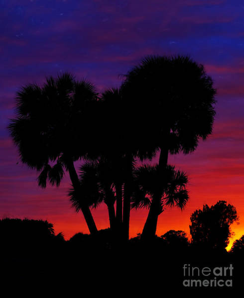 Photograph - Palm Trees At Sunset by Les Palenik