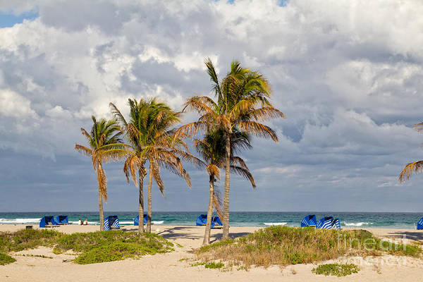 Photograph - Palm Trees At The Beach by Les Palenik