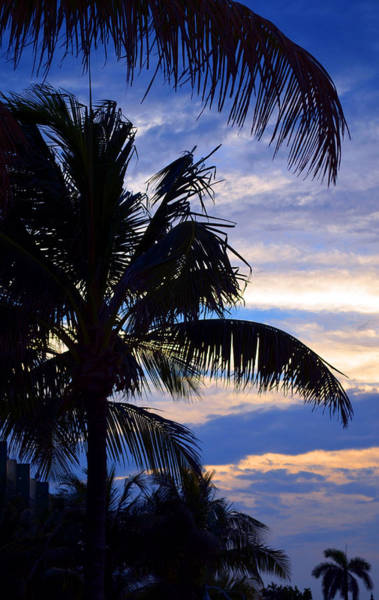 Photograph - Palm Trees At The Beach by Patricia Awapara