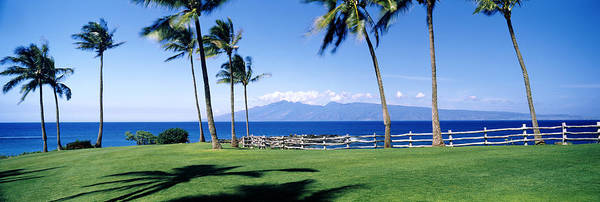 Kapalua Photograph - Palm Trees At The Coast, Ritz Carlton by Panoramic Images