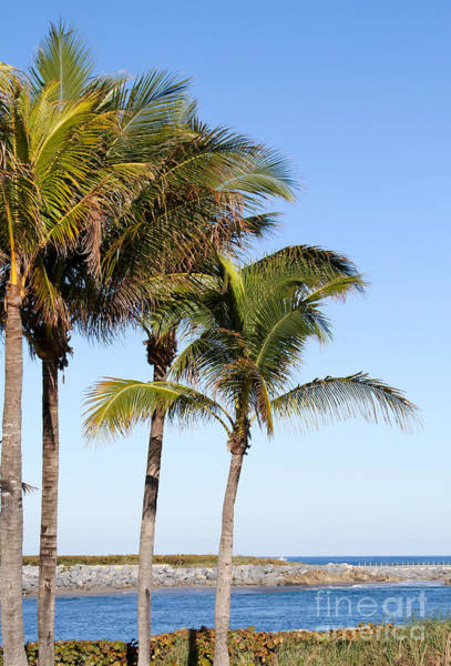 Photograph - Palm Trees At The Jupiter Inlet by Sabrina L Ryan