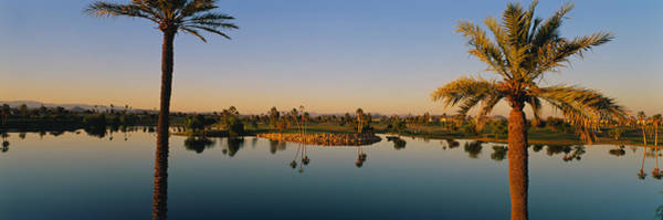 Maricopa Photograph - Palm Trees At The Lakeside, Phoenix by Panoramic Images