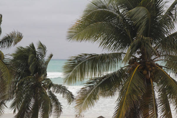 Photograph - Palm Trees By The Ocean by Nick Mares