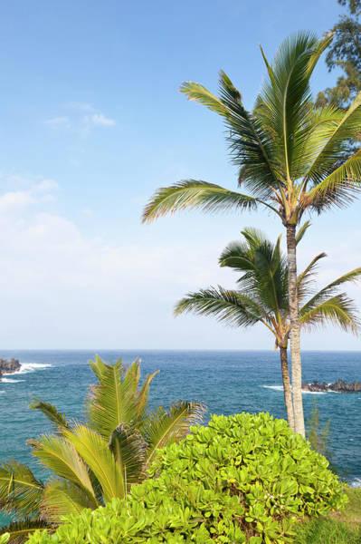Maui Photograph - Palm Trees By The Sea, Maui by Michaelutech