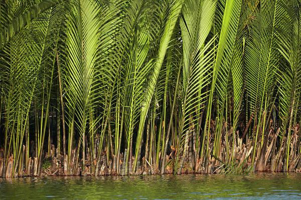 Hoi An Photograph - Palm Trees By Thu Bon River, Hoi An by David Wall