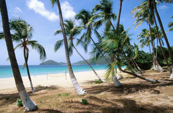 British Virgin Islands Photograph - Palm Trees Facing Beach by John Elk