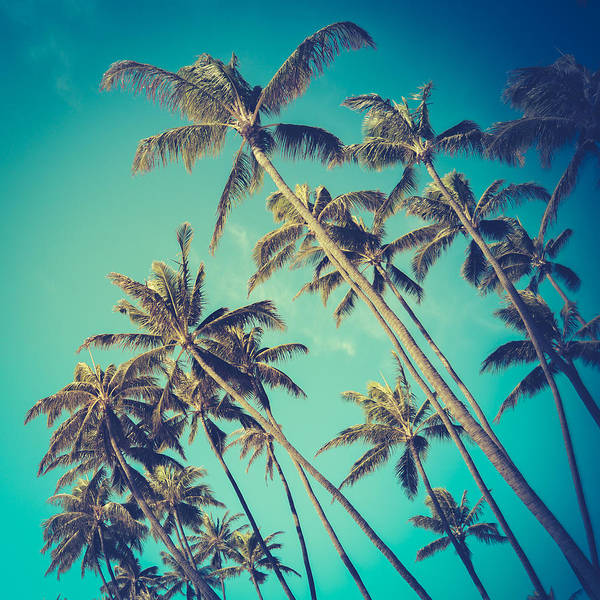 Wall Art - Photograph - Palm Trees In Hawaii by Mr Doomits