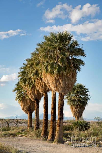 Wall Art - Photograph - Palm Trees by Jane Rix