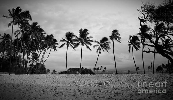 Photograph - Palm Trees Maui Hawaii by Edward Fielding