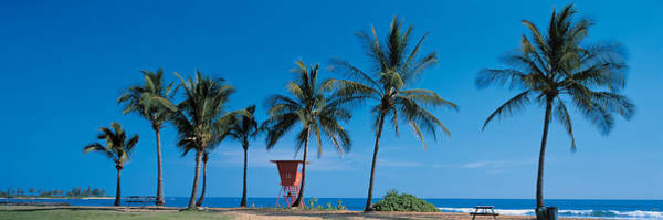Faint Wall Art - Photograph - Palm Trees Oahu Hi Usa by Panoramic Images