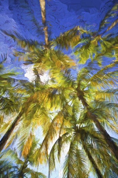 Painting - Palm Trees Of Aruba by David Letts