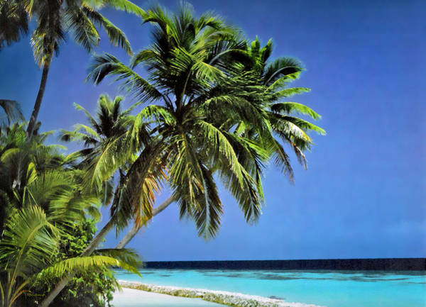 Photograph - Palm Trees On Little Palm Island Filtered by Duane McCullough