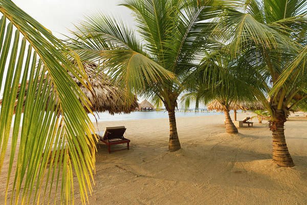Belize Photograph - Palm Trees On Sandy Beach, Placencia by William Sutton