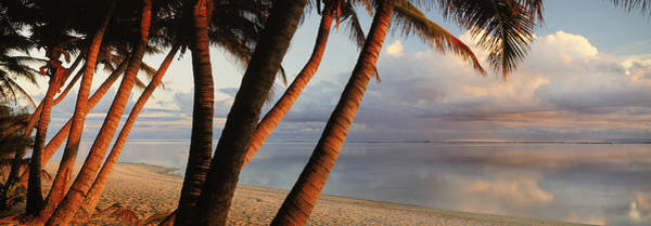 Rarotonga Photograph - Palm Trees On The Beach At Sunset by Panoramic Images