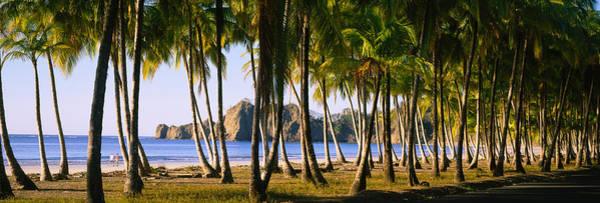 Carrillo Photograph - Palm Trees On The Beach, Carrillo by Panoramic Images