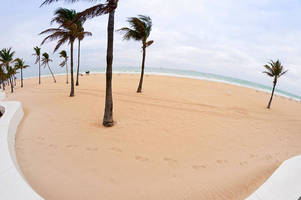 Fish Eye Lens Photograph - Palm Trees On The Beach, Fort by Panoramic Images