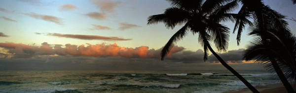 Peacefulness Photograph - Palm Trees On The Beach, Hawaii, Usa by Panoramic Images
