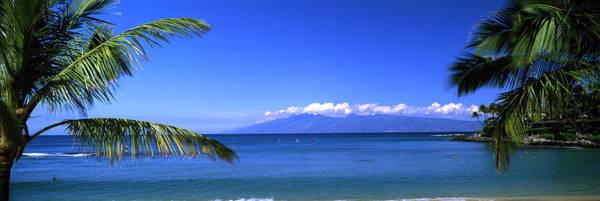 Kapalua Photograph - Palm Trees On The Beach, Kapalua Beach by Panoramic Images