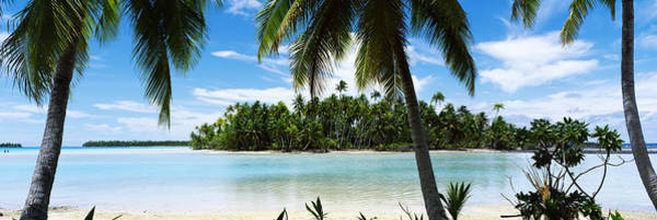French Polynesia Photograph - Palm Trees On The Beach, Rangiroa by Panoramic Images