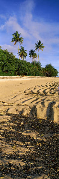 Rarotonga Photograph - Palm Trees On The Beach, Rarotonga by Panoramic Images