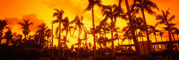 Dade Photograph - Palm Trees On The Beach, The Setai by Panoramic Images