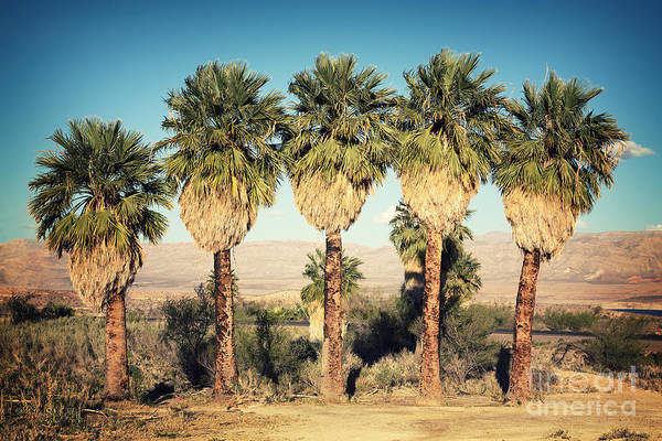 Wall Art - Photograph - Palm Trees Retro by Jane Rix