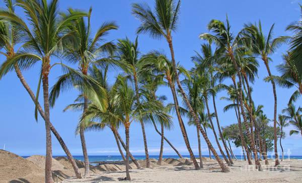 Photograph - Palm Trees Sway By Diana Sainz by Diana Raquel Sainz