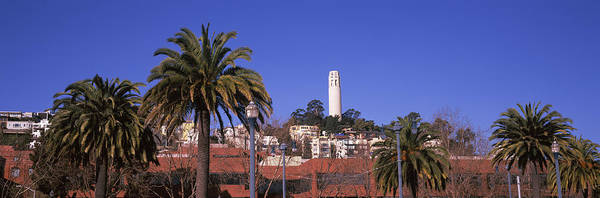 Coit Tower Photograph - Palm Trees With Coit Tower by Panoramic Images