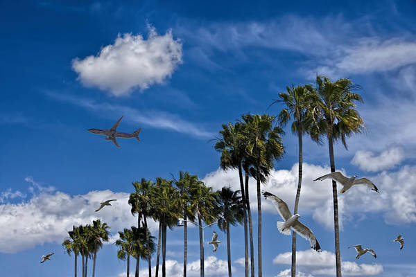 Photograph - Palm Trees With Jet Airliner And Gulls by Randall Nyhof