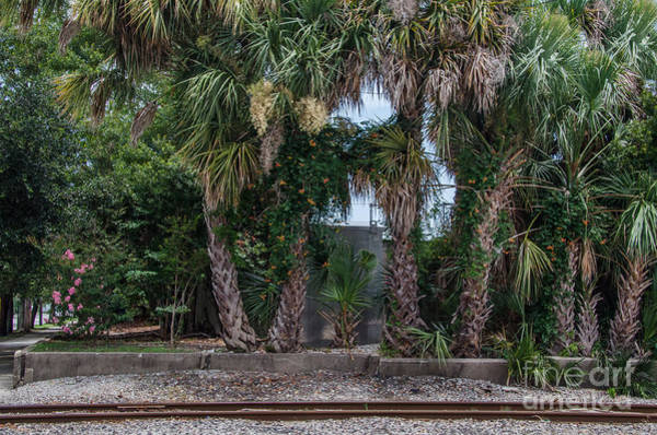 Photograph - Palmetto Crossing by Dale Powell