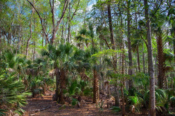 Palmetto Photograph - Palms - An Extended Family by W Chris Fooshee
