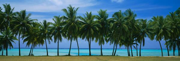 Faint Wall Art - Photograph - Palms & Lagoon Aitutaki Cook Islands by Panoramic Images