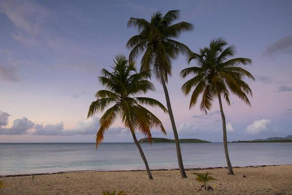 Wall Art - Photograph - Palms At Daybreak by Patrick Downey