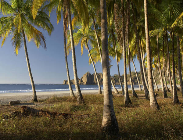 Carrillo Photograph - Palms At Playa Carrillo Costa Rica by Tim Fitzharris