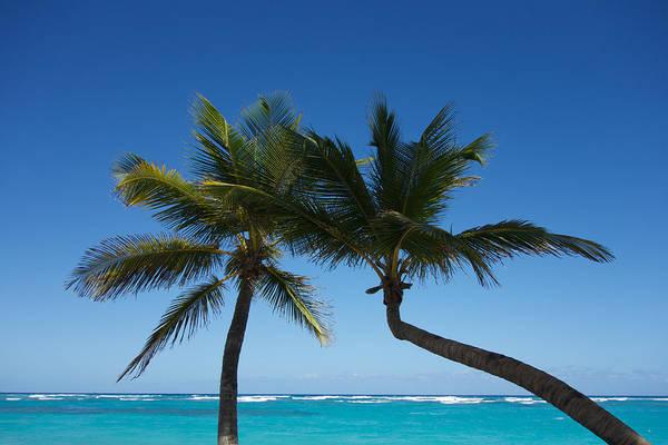 Alejandro Gutierrez Wall Art - Photograph - Palms In Paradise by Alejandro Gutierrez