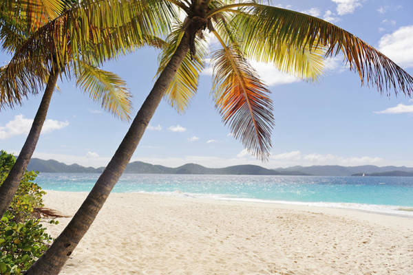 Beach Holiday Photograph - Palms Over Sandy Beach by Johner Images