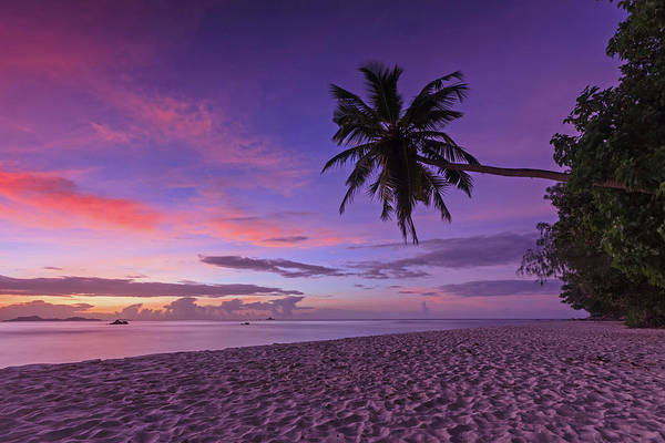 Collin Photograph - Palmtree On The Beach At Sunset In by © Frédéric Collin