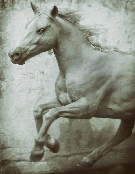Photograph - Palomino Beauty by Barry Weiss